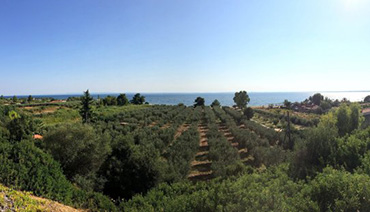 Visit in Halkidikis' Olive Groves